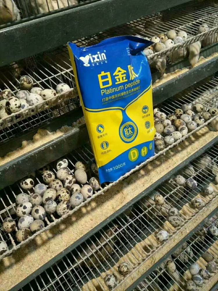 蛋鸡吃什么下蛋多,提高产蛋率  蛋鸡增蛋素