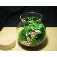 多肉植物玻璃木塞玻璃圆球 微景观生态玻璃瓶 苔藓DIY玻璃