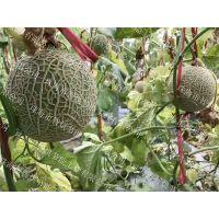 智烘牌农家通用型水果类哈密瓜烘干机,哈密瓜干燥设备应用领域ZH-JN-HGJ03