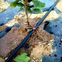 四川山区橘子树灌溉安装压力补偿式滴头成本