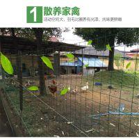 养鸡铁丝网 圈地养殖围栏网 果园防护网