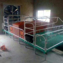 养猪设备热镀锌双体母猪产床复合板多少钱 恒力机械养殖设备厂家直销
